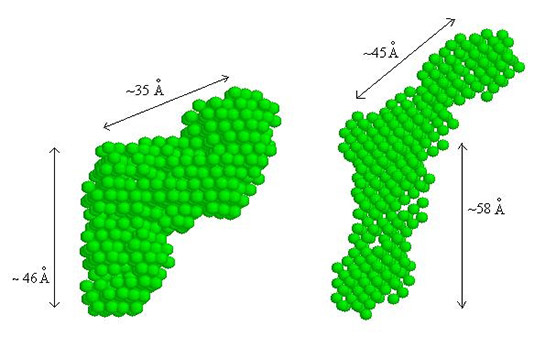 A figure of molecular shapes/envelopes determined from the measured SAXS data of SpαI-1-156 and SpαII-1-149.