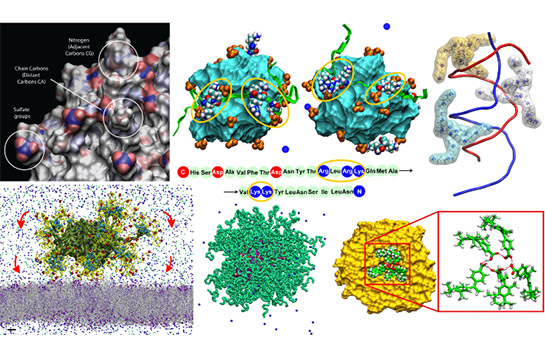 The Kral group studies molecular transport and machinery.