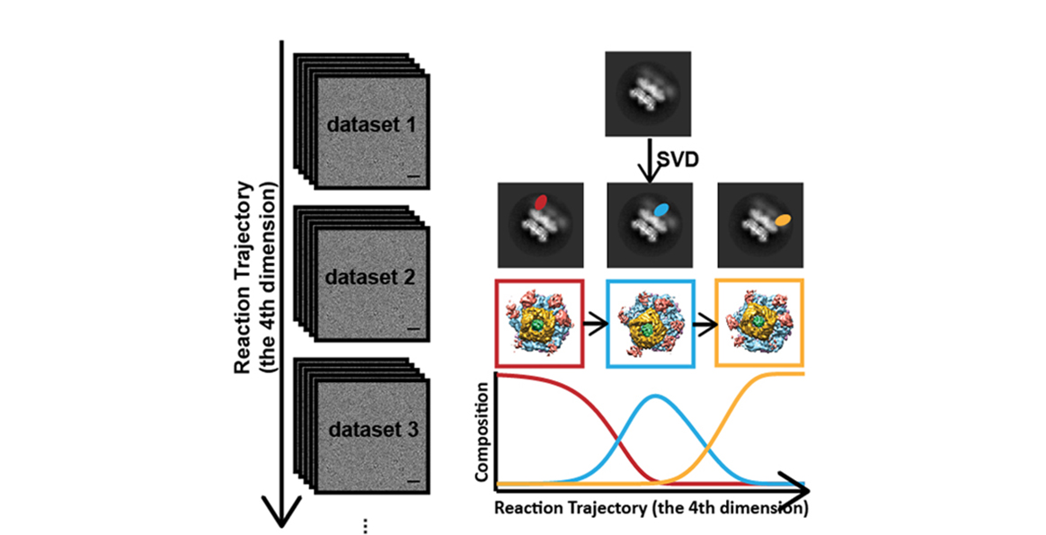 Prof. Yang has a method to measure the structural changes of proteins using time-resolved X-ray Diffraction.