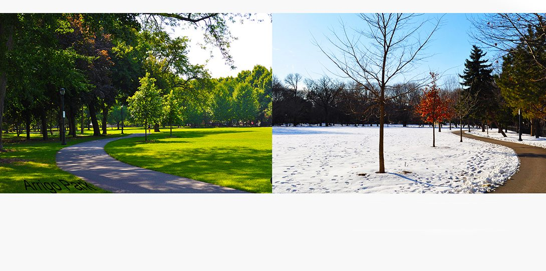 Arrigo park is blanked with snow in January.