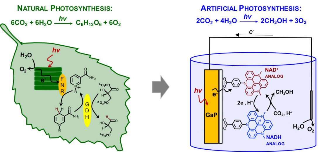 The Glusac group is studying natural processes to create artificial photosynthesis .